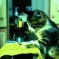Gif do gato costureiro