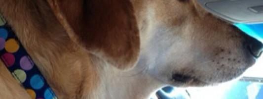 Inspiração – Coleira para identifico de cachorro